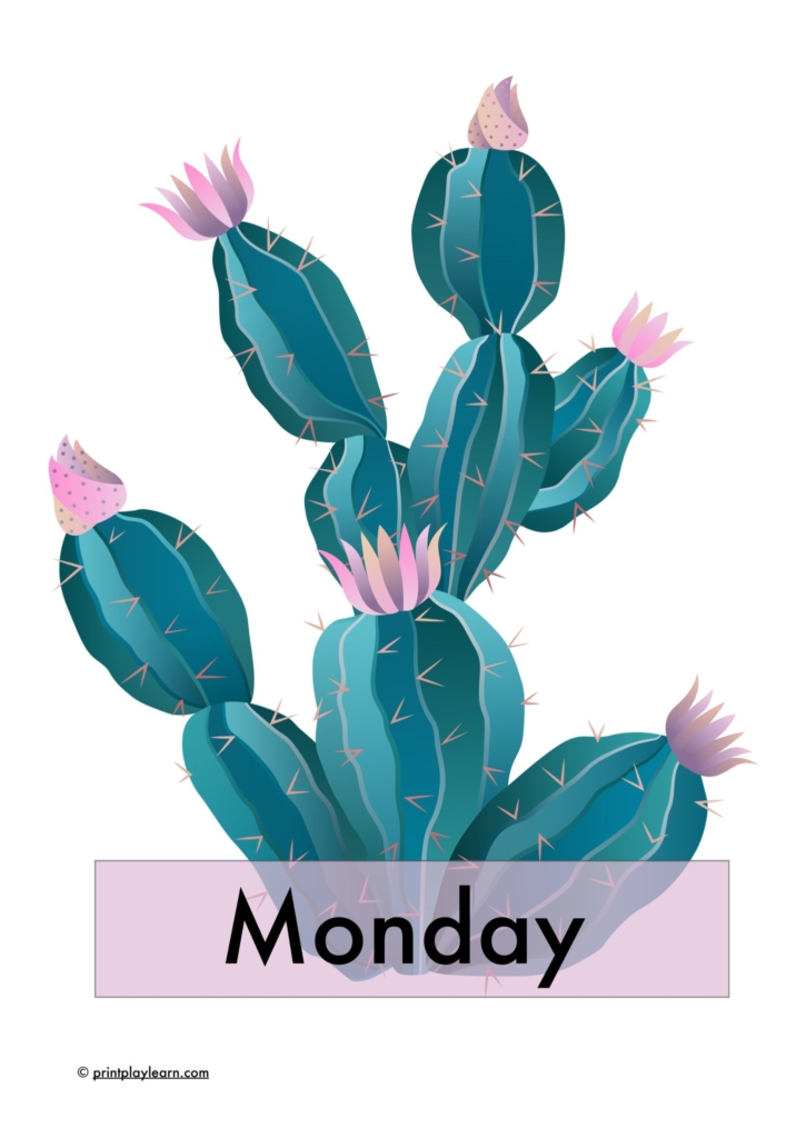 cactus days of the week