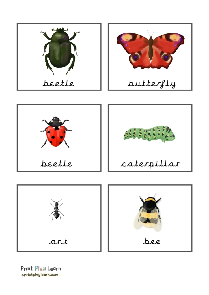 montessori classification cards insects from printplaylearn