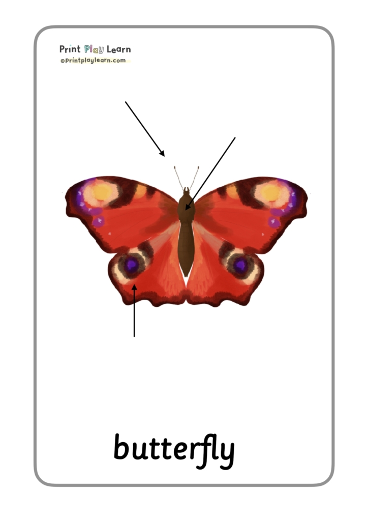 labels for insect butterflies